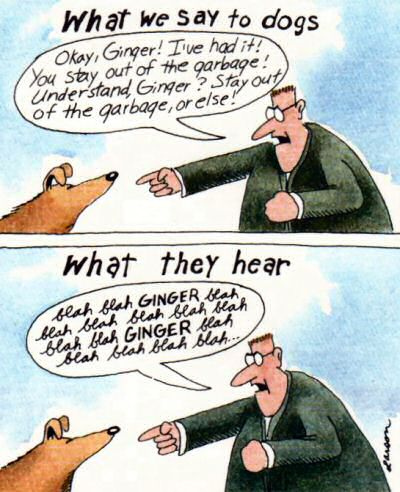 You're not just being paranoid... Far-side-what-dogs-hear